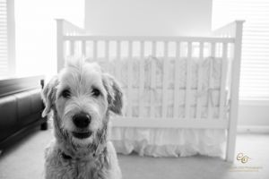 Dog and Baby portrait Charlotte.jpg